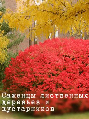 Саженцы лиственных деревьев и кустарников